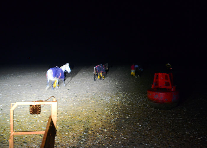 Horses being led off on the east side of Burnham Overy harbour entrance channel